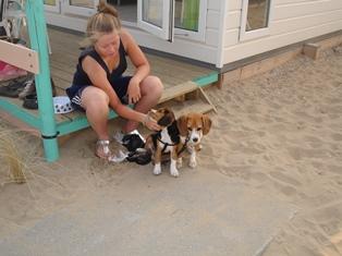 strandhuisje key west hond welkom